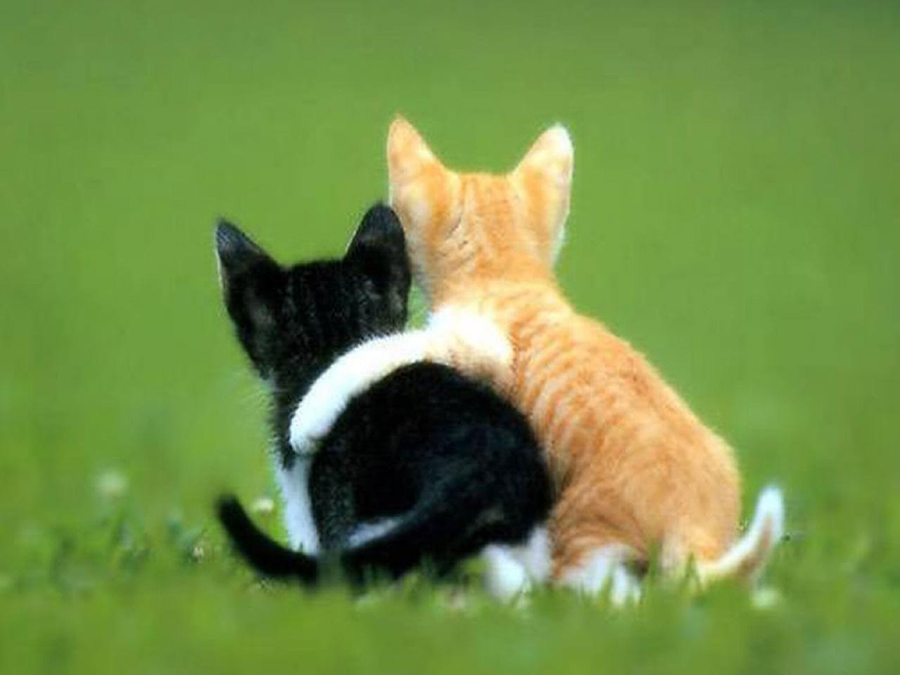 Fakta Tentang Kucing Tsani Its Me